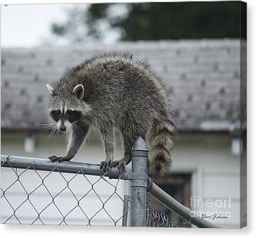 Canvas Print featuring the photograph Raccoon  by Yumi Johnson
