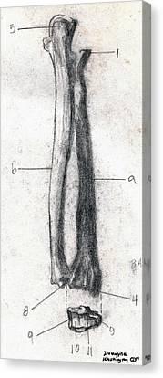 Radius And Ulna Canvas Print by Duwayne Washington