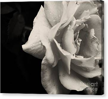 Canvas Print featuring the photograph Rain Drops On Roses by Julie Clements