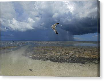 Flying Seagull Canvas Print - Rain Falls From A Huge Cloud by Raul Touzon