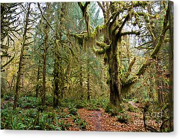 Rain Forest In Fall Canvas Print