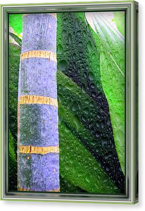 Rain Forest Canvas Print by Mindy Newman