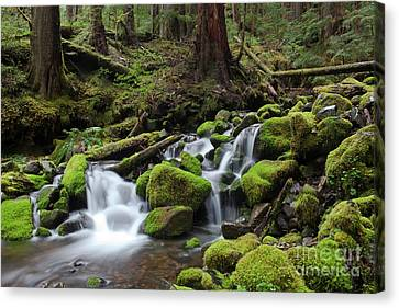 Natural Resources Canvas Print - Rain Forest Waterfall by Keith Kapple
