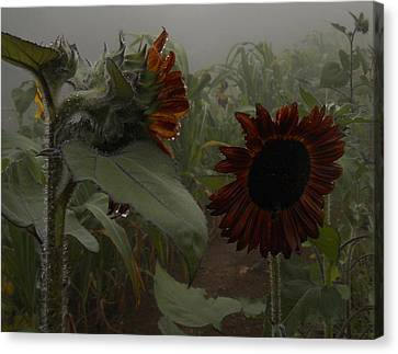 Canvas Print featuring the photograph Rain In The Sunflower Garden by Diannah Lynch