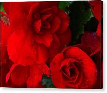 Rain Kissed Roses Canvas Print