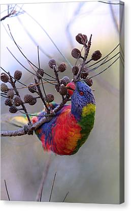 Rainbow At Play Canvas Print by Paul Svensen