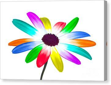 Diversity Canvas Print - Rainbow Daisy by Richard Thomas