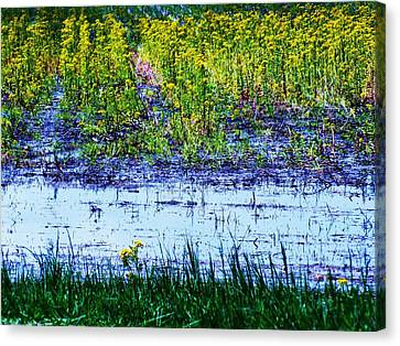 Rainbow Field Canvas Print by Todd Sherlock
