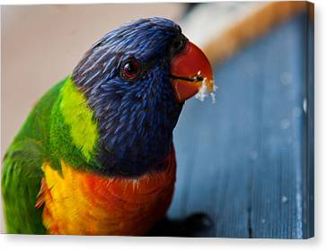 Canvas Print featuring the photograph Rainbow Lorikeet by Carole Hinding