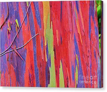 Canvas Print featuring the photograph Rainbow Of Eucalyptus Bark by Michele Penner