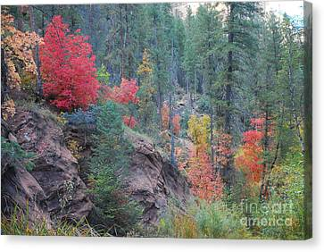 Rainbow Of The Season Canvas Print by Heather Kirk