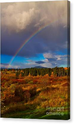 Canadian Marsh Canvas Print - Rainbow Over Rithets Bog by Louise Heusinkveld
