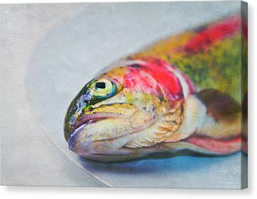 Rainbow Trout On Plate Canvas Print by Image by Catherine MacBride