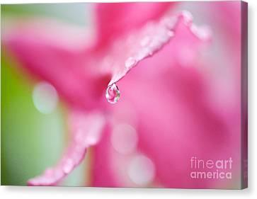 Raindrop Canvas Print by Kim Fearheiley