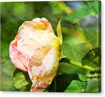 Raindrops And Roses Canvas Print