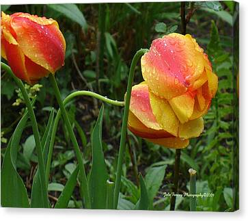 Raindrops And Tulips Canvas Print