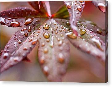 Canvas Print featuring the photograph Raindrops by Scott Holmes
