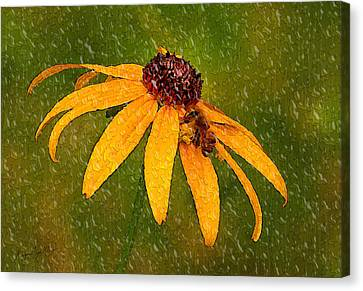 Rained Upon Canvas Print