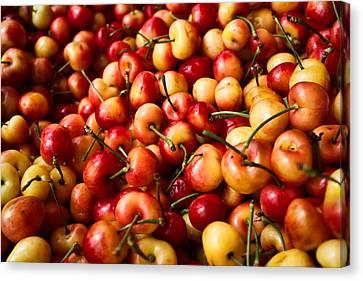 Rainier Cherries Canvas Print by Tanya Harrison
