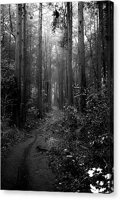 Rainy Forest Canvas Print by By U2penguin