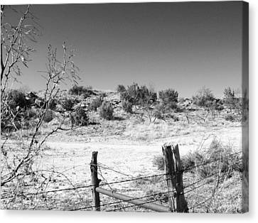 Ranch Fence And Redberry Junipers Two Canvas Print by Louis Nugent