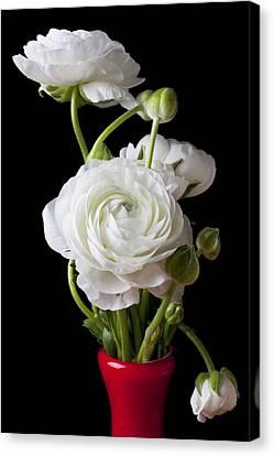 Ranunculus In Red Vase Canvas Print by Garry Gay