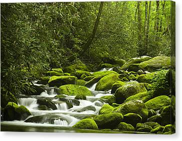 Rapids At Springtime Canvas Print by Andrew Soundarajan