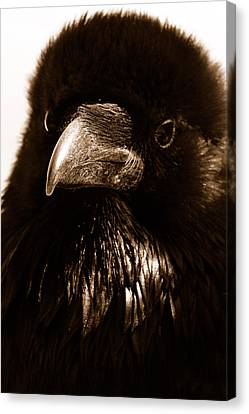 Raven In Black Canvas Print
