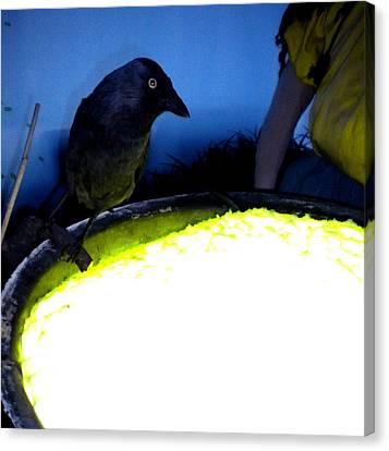 Raven Reflecting  Canvas Print by Colette V Hera  Guggenheim