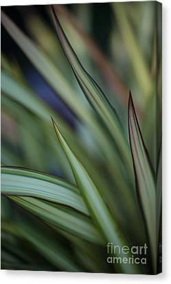 Depth Of Field Canvas Print - Razor Kaleidoscope by Mike Reid