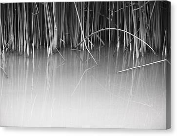 Canvas Print featuring the photograph Reach by Kevin Bergen