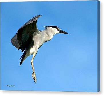 Reaching For The Nest Canvas Print