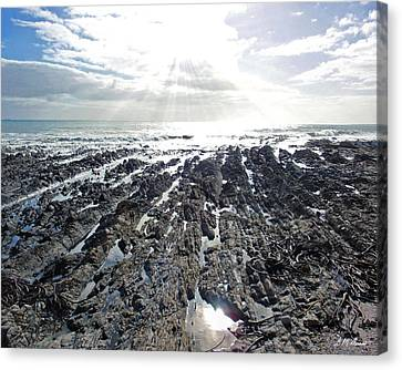 Reaching Canvas Print by Michael Durst