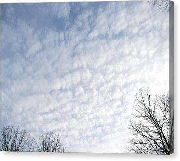Canvas Print featuring the photograph Reaching The Clouds by Pamela Hyde Wilson