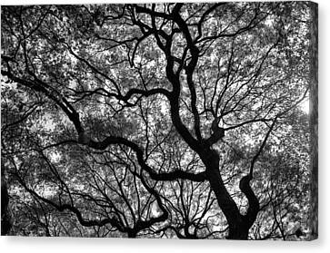 Reaching To The Heavens Canvas Print by Andrew Crispi
