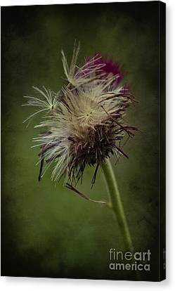 Canvas Print featuring the photograph Ready To Fly Away... by Clare Bambers