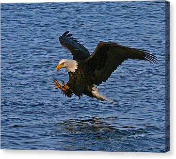 Canvas Print featuring the photograph Ready To Strike by Doug Lloyd