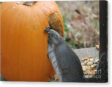 Canvas Print featuring the photograph Real Hungry Squirrel by Mark McReynolds