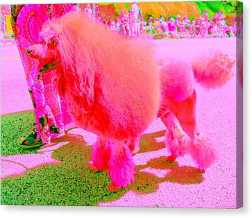 Really Pink Poodle Canvas Print by Randall Weidner