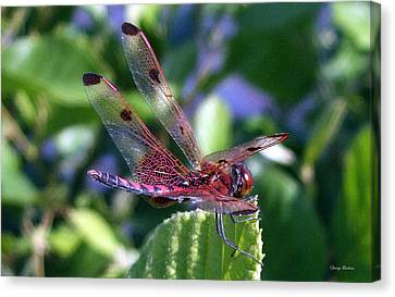 Canvas Print featuring the photograph Red And Black Dragonfly by George Bostian