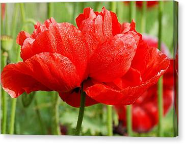 Canvas Print featuring the photograph Red And Green by Fotosas Photography
