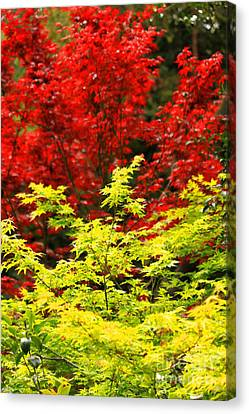Red And Yellow Leaves Canvas Print by James Eddy