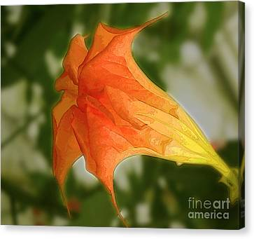 Red Angels Trumpet Flower Canvas Print