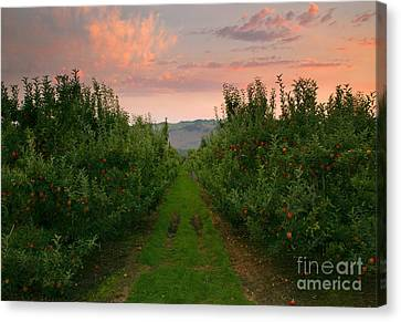Red Apple Sunset Canvas Print by Mike  Dawson