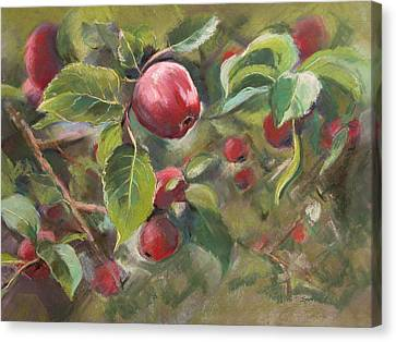 Red Apples Canvas Print by Synnove Pettersen