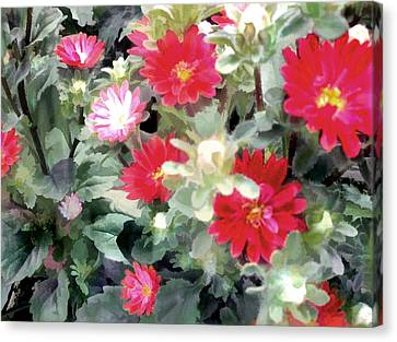 Red Asters Canvas Print by Elaine Plesser