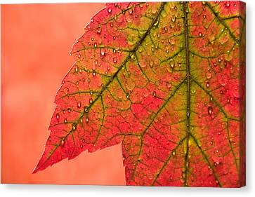 Red Leaf Canvas Print - Red Autumn by Carol Leigh