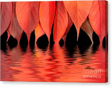 Red Autumn Leaves In Water Canvas Print by Simon Bratt Photography LRPS