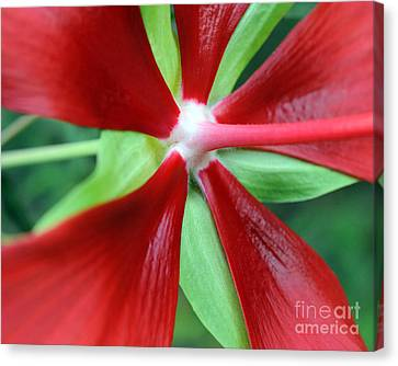 Red Awakening Canvas Print