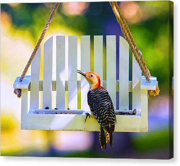 Red-belly Comes For Lunch Canvas Print by Bill Tiepelman